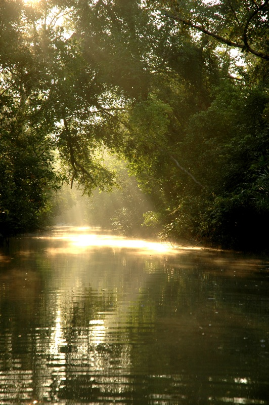 Around the World: The Sundarbans