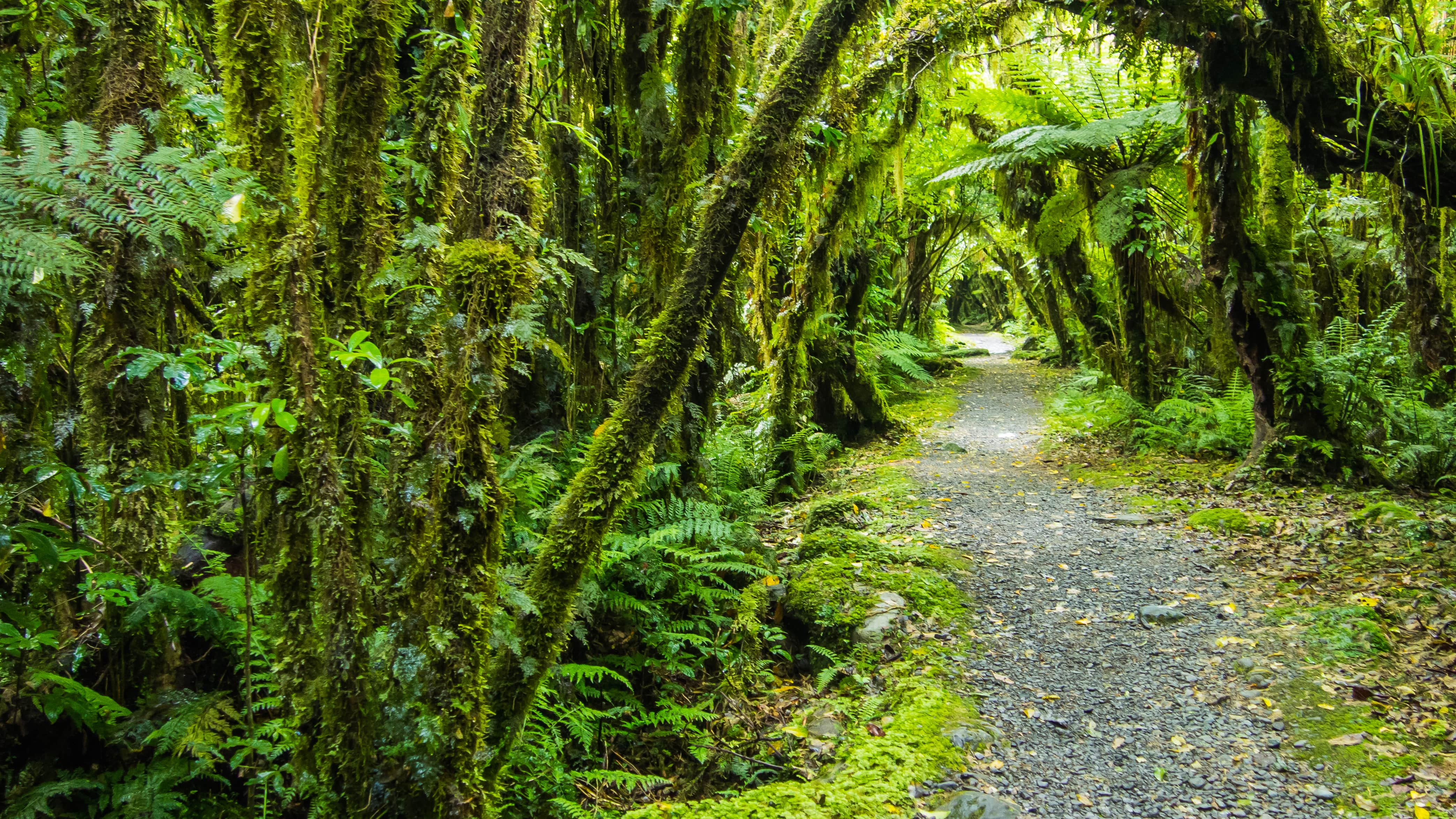 native New Zealand forest with hiking path in oceania