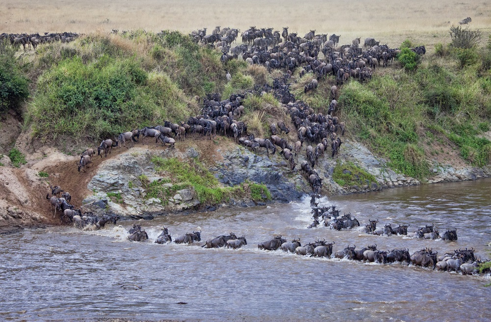 great migration wildebeest crossing- VFR travel