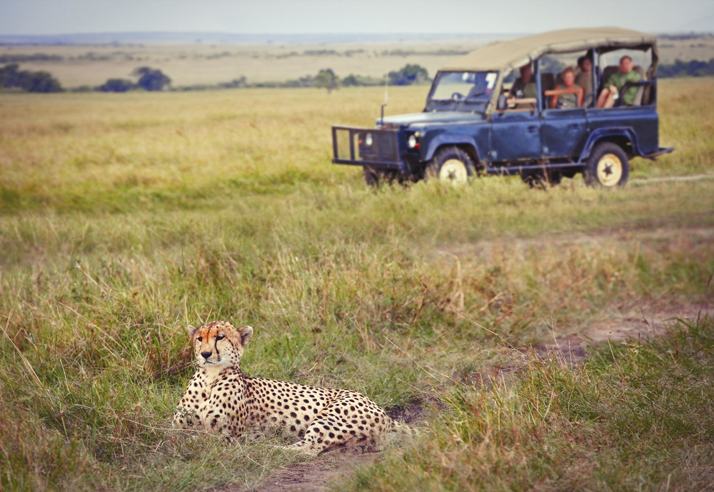 Cheetah spotted during safari-VFR travel