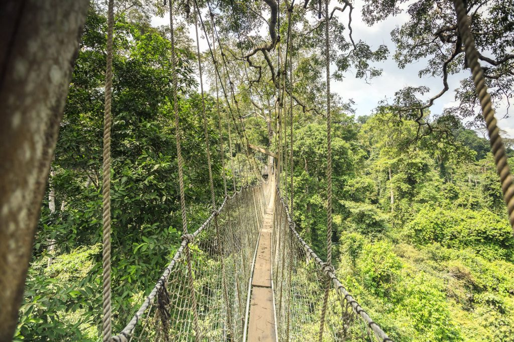 Kakum National Park. A lesser-known African landmark with a canopy walkway.