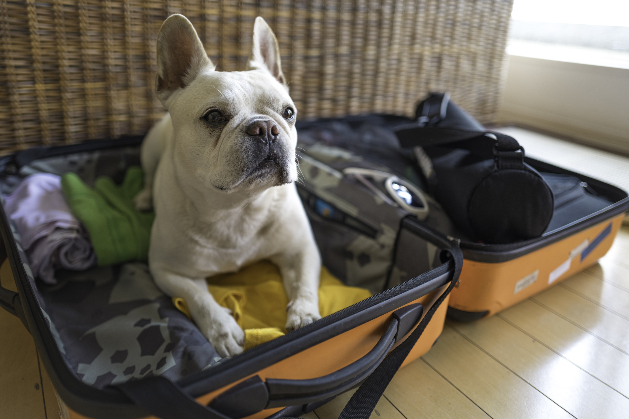 Trends - dog laying in suitcase