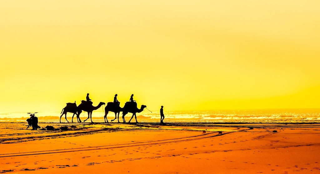 camels-on-essaouira-beach-morocco