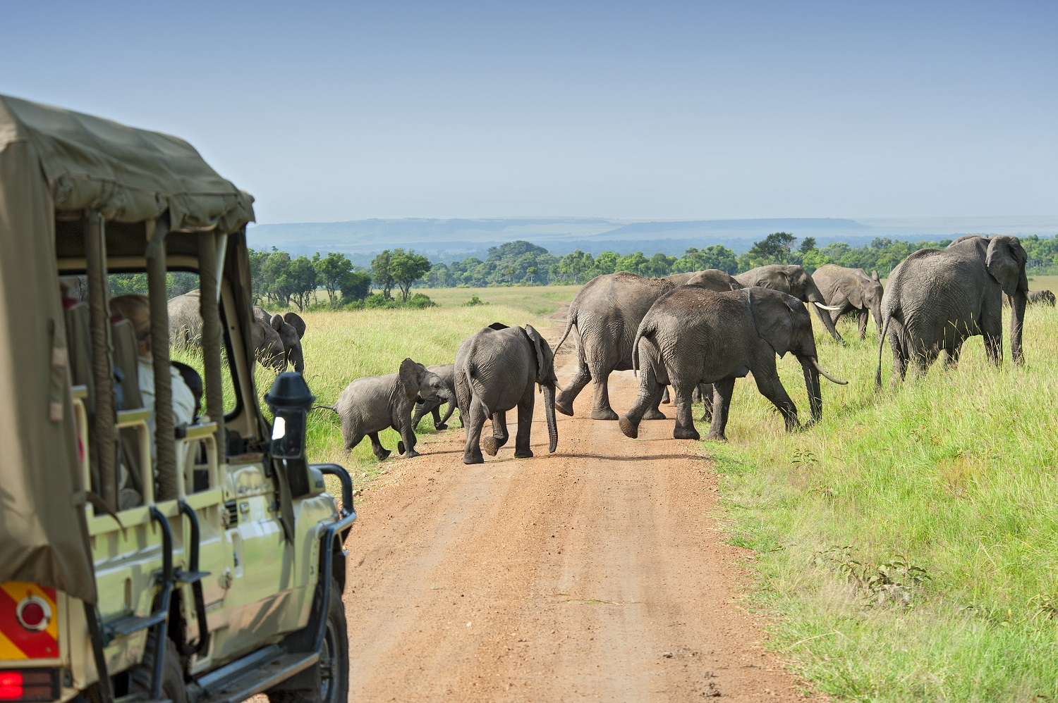 Elephants spotted on safari in South Africa