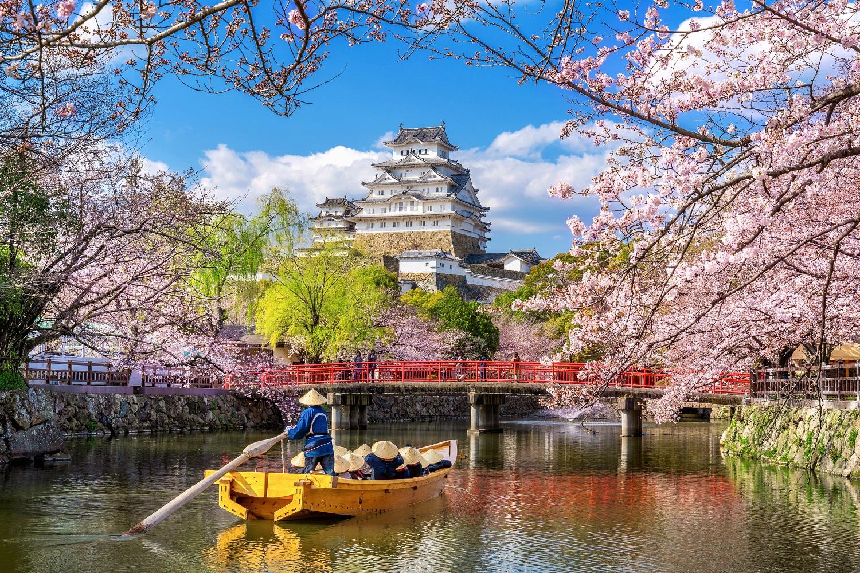Cherry blossoms-Japan